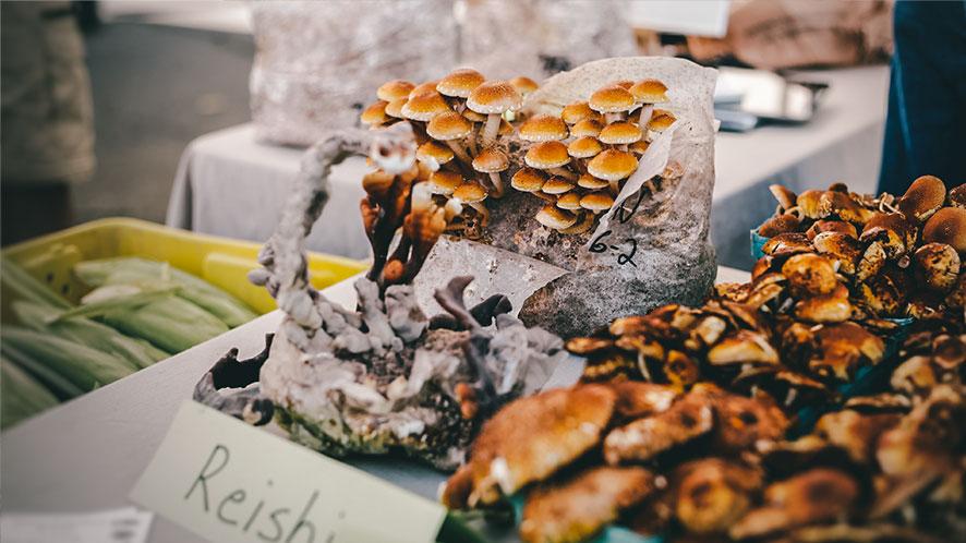 Cómo subir las defensas tomando hongos para reforzar tu sistema inmunitario.